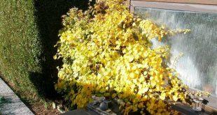 November: dit kan je nog doen in de tuin