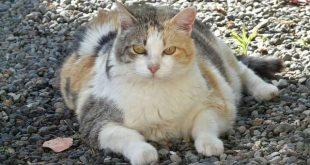 Is jouw huisdier te dik?