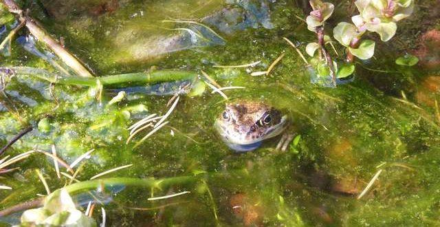 Kleine amfibieën met grote trek