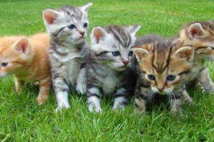 Kittens en melk goede combinatie