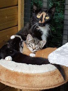 Mama Lolita met haar kroost.
