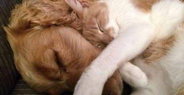 Op vakantie met je hond of kat