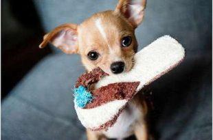 Kies een hond die bij je past!