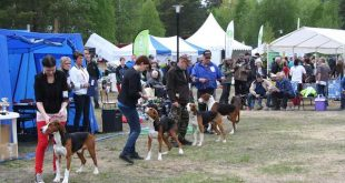 Luxemburg verbiedt grote hondenshow