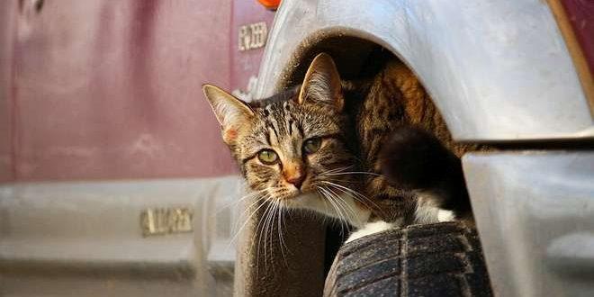 Een kat onder de motorkap