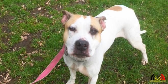 Hond Bailey - Canina Dierneasiel - Noordernieuws.be - IMG_7193