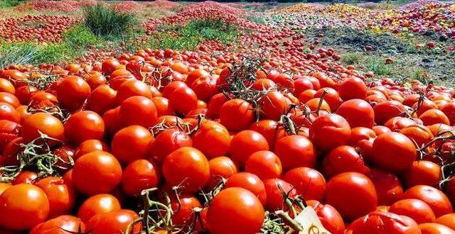 Honderden tonnen tomaten en paprika's gedumpt