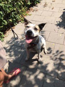 Bailey uit Dierenasiel Canina