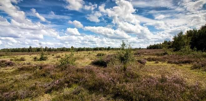Wandeling Grenspark De Zoom-Kalmthoutse Heide