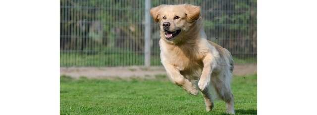 Hondenschool K.V. Brabo in de bres voor Canina
