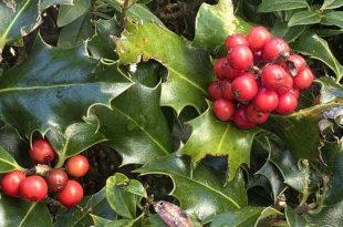 Koop voordelig planten voor woonbos en weekendzone