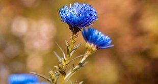 To-do's voor je tuin in september