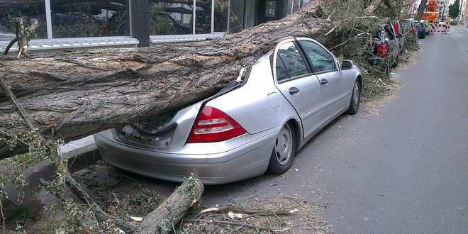 Wat als omvallende boom van de buren bij mij schade veroorzaakt
