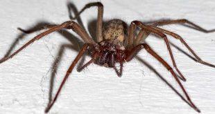 Zo houd je spinnen buiten!