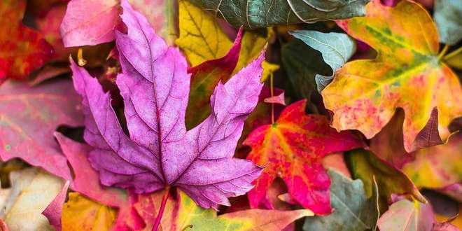 Bladeren mogen in de korf