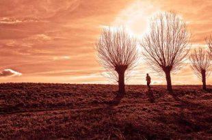 Gratis beheer knotbomen, houtkanten en hakhoutbosjes