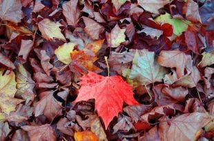 Met het vallen van de bladeren