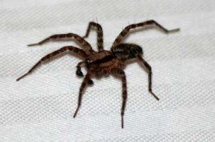 Spinnentijd 5 misverstanden over achtpotigen