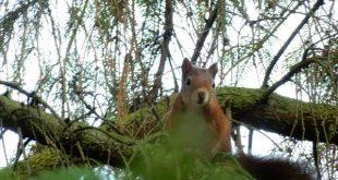 Boombruggen voor eekhoorns in Essen