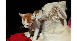 Dierenartsen organiseren Warmste Winterdrink ten bate van Canina