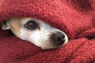 Help je hond de jaarwisseling door!