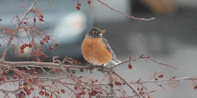 Hoe voeder je de vogels in je tuin
