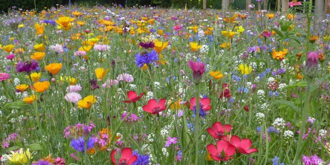 Samenaankoop bloemenzaden