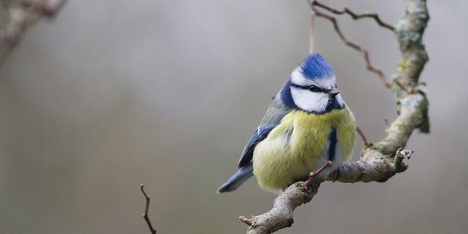 Dan toch eindelijk vriesweer wat doen onze tuinvogels