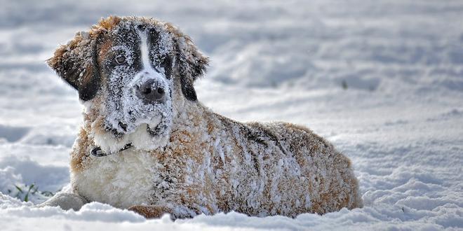 Wandelen met je hond 10 wintertips