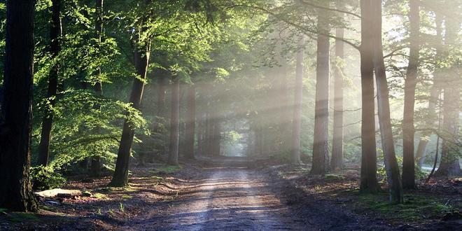 Woon jij in een zone met bosrijk karakter
