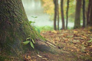 Beheerwerken in bospercelen domein Zusters Franciscanessen