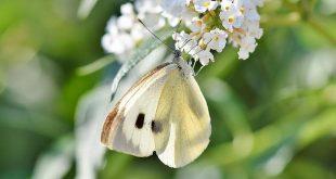 Over snoeiafval en vlindereitjes
