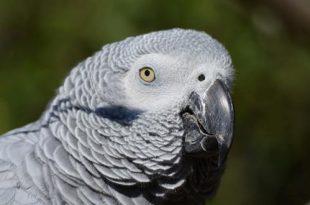 Turkish Airlines sluit ogen voor dierensmokkel