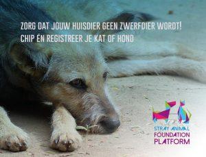4 april Wereld Zwerfdierendag2