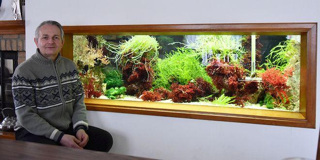 De bijzondere hobby van Piet Hectors - Zeepaardjes kweken - Zoutwater Aquarium