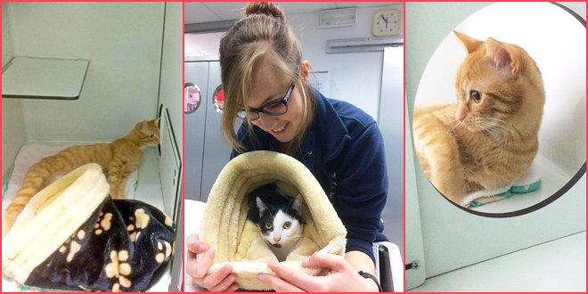 Essen Dierenkliniek Ilse Castelijns - Gold Status Catfriendly Clinic