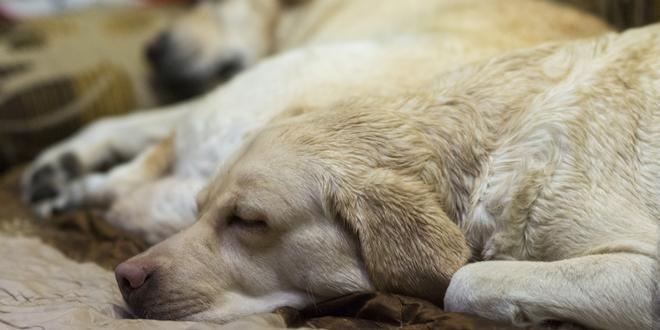 Help je hond beter slapen