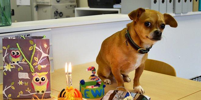 Leerlingen Freinetschool Essen vieren hondje Lewis 3 jaar - (c) Noordernieuws.be 2019 - HDB_2101 u2