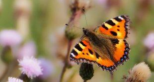 Maak van je tuin een vlindercafeetje