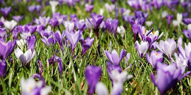 Maart wat moet er deze maand gebeuren in de tuin