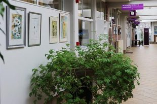 Nieuwe tentoonstelling in het gemeentehuis