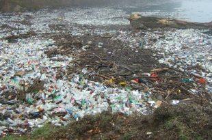 Zeebaars sterft door plastic in maag