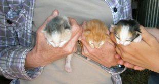Zwerfkatten of (gedumpte) kittens?