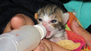 116 De Hobby van Peggy Lambrechts - Gastgezin Kittens - Canina - (c) Noordernieuws.be - IMG_9173