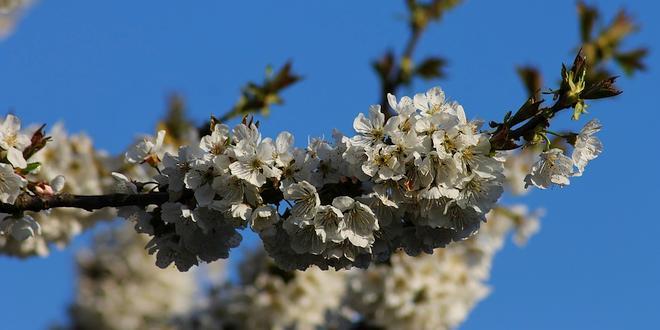 Allereerste lentewandeling voor slechthorenden Arboretum zondag 28 april