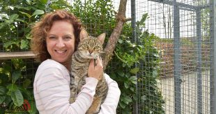 De Hobby van Peggy Lambrechts - Gastgezin Kittens - Canina
