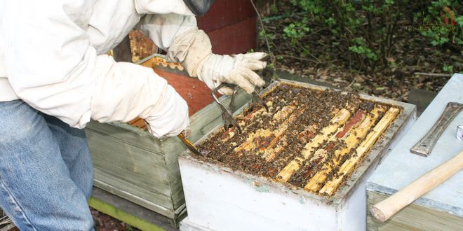 Imker Vik Dierickx - Hobby Honingbijen - Bijenkorven