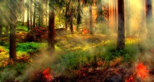 Verhoogd brandgevaar in bos- en heidegebieden
