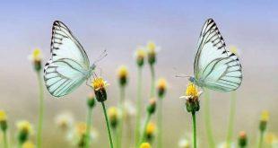 BIJ-zonder VlinderVriendelijke tuinwedstrijd
