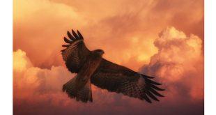EuroBirdPortal Vogeltrek in Europa nu live te volgen